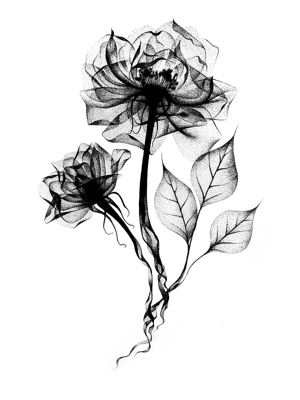 x-ray flowers art