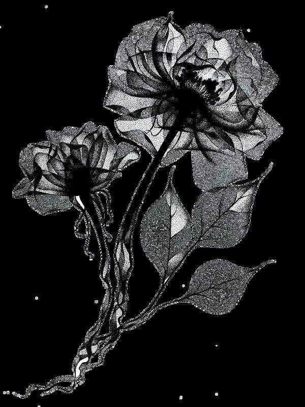 roses_Transparent.png