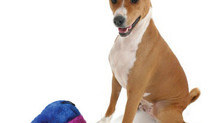 Shop For Pet Toys at Precious Angels Pets Online Store.
