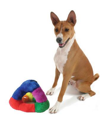 dog w triangle toy.jpg