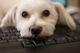 dog on computer.jpg