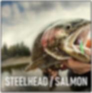 Steelhead Salmon.JPG