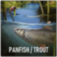 Panfish Trout.JPG