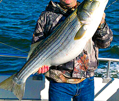 Basic Knowledge about Striped Bass Fishing: Learn More to Catch More