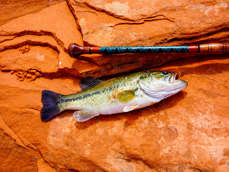 Bass Fishing - What Is All the Buzz About?