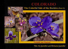 Colorado Wildflowers Part 1