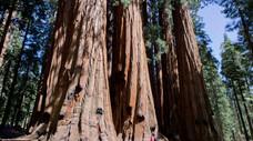 Exploring Sequoia National Park – California, U. S. A.