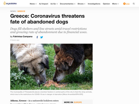 Greece: Coronavirus threatens fate of abandoned dogs