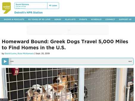 Homeward Bound: Greek Dogs Travel 5,000 Miles to Find Homes in the U.S.