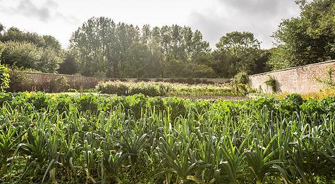 walled garden x.jpg