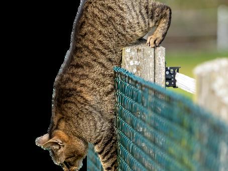 Achtung Katze!