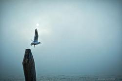 laure jacquemin venise photographe brume plus belles photos venezia foto (10).jp