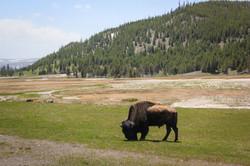 Wyoming_web-0291.jpg