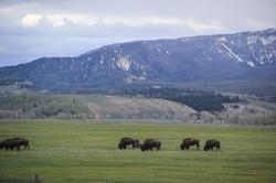 Wyoming_web-0610.jpg