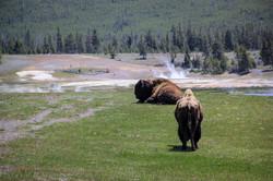 Wyoming_web-0282.jpg