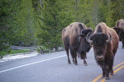 Wyoming_web-0381.jpg