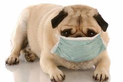 Kennel Cough Risk Factors