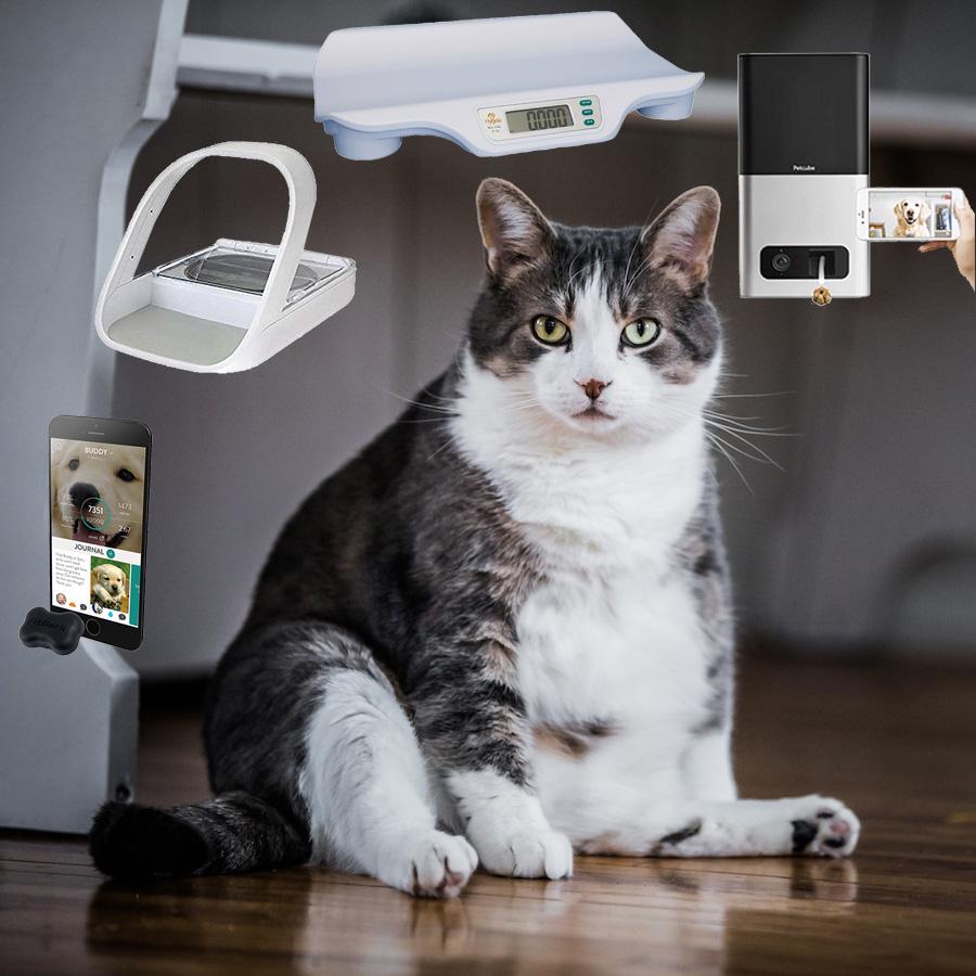 Cat Weight Loss Technology