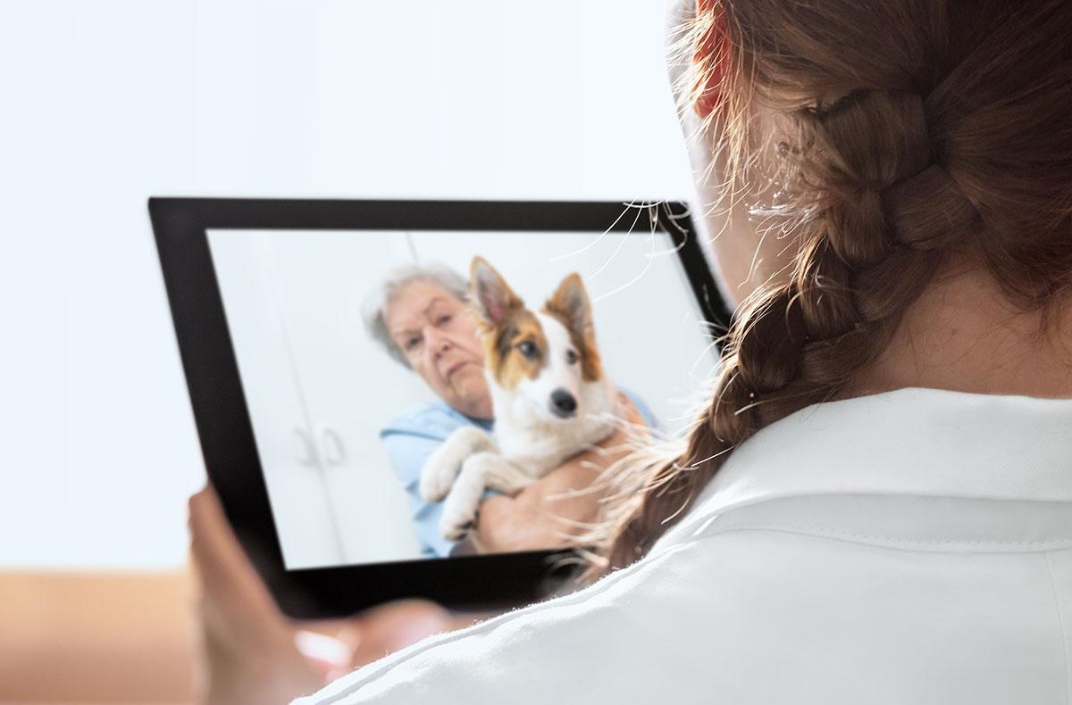 Veterinary Views on Telemedicine