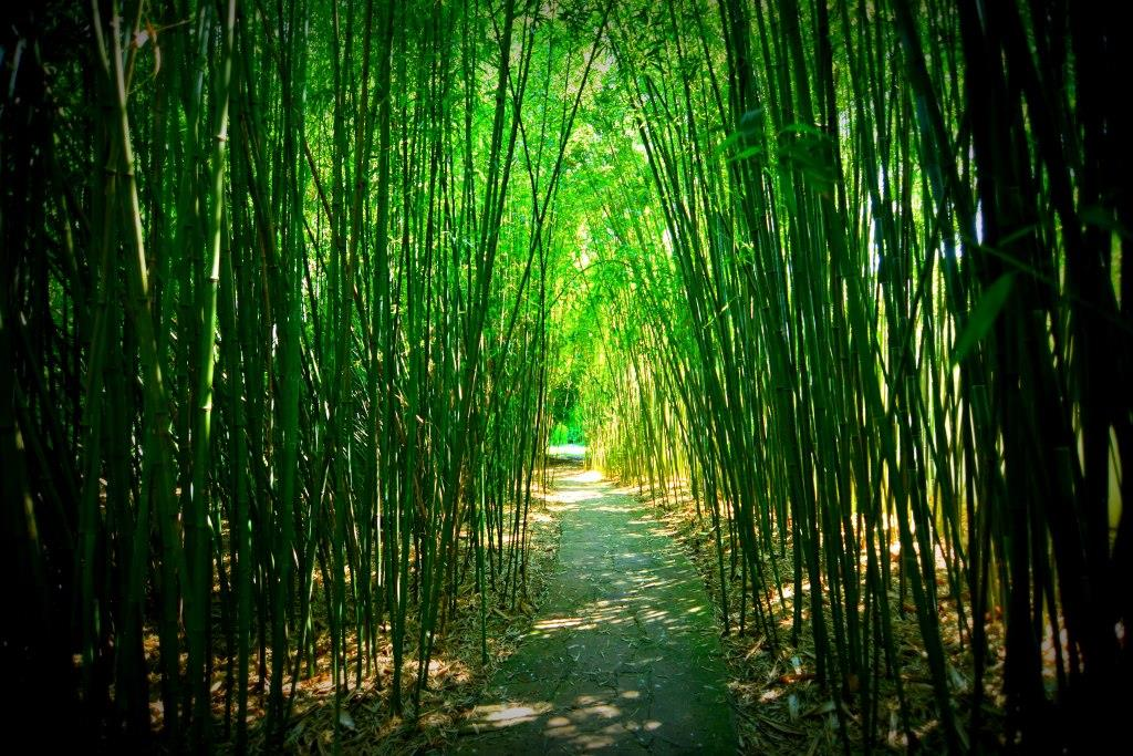 Bamboolane3