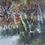 Thumbnail: Autumn Forest