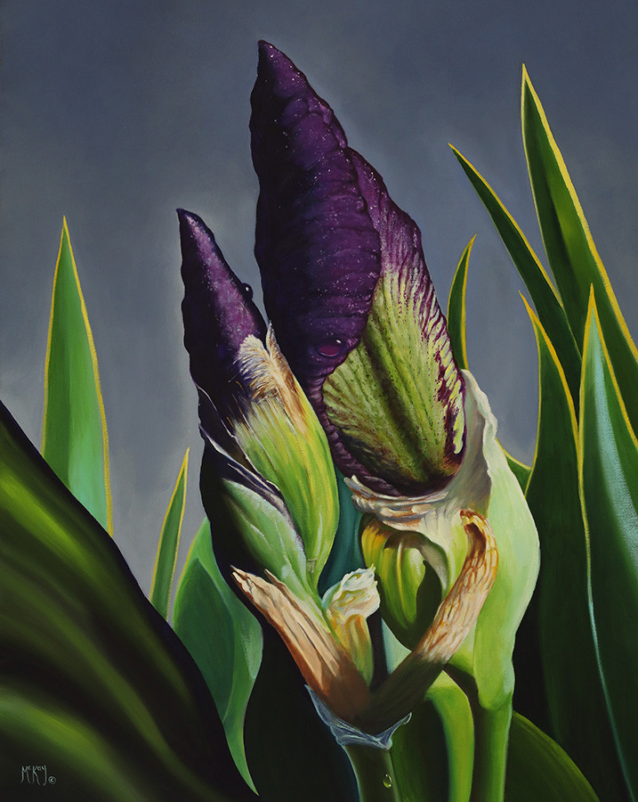 Two irises seem to embrace in a dance of love.