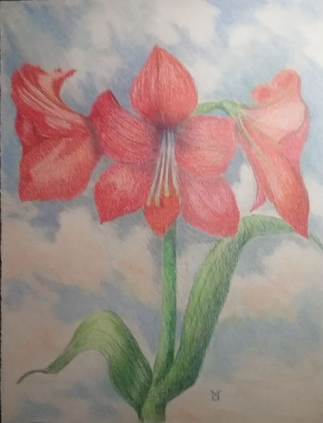 Amaryllis in the Clouds.jpg