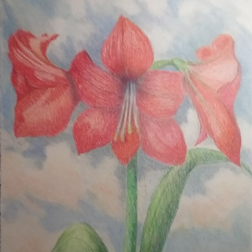 Amaryllis in The Clouds