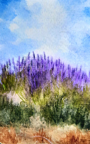 Afternoon Lavender, un souvenir de Franc