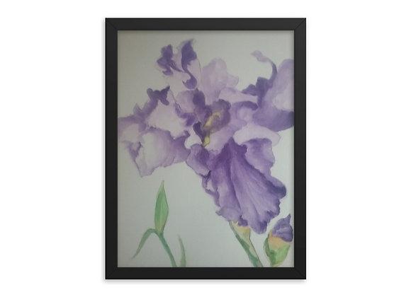 Iris Framed poster