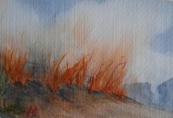 Brush Fire.jpg