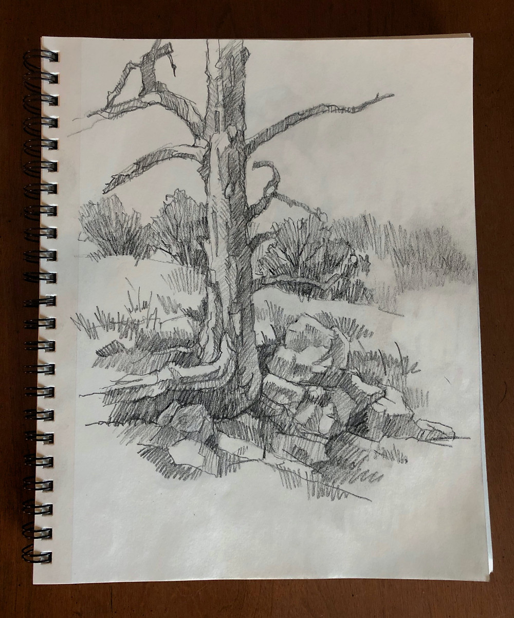 Black and white drawing of a tree trunk.