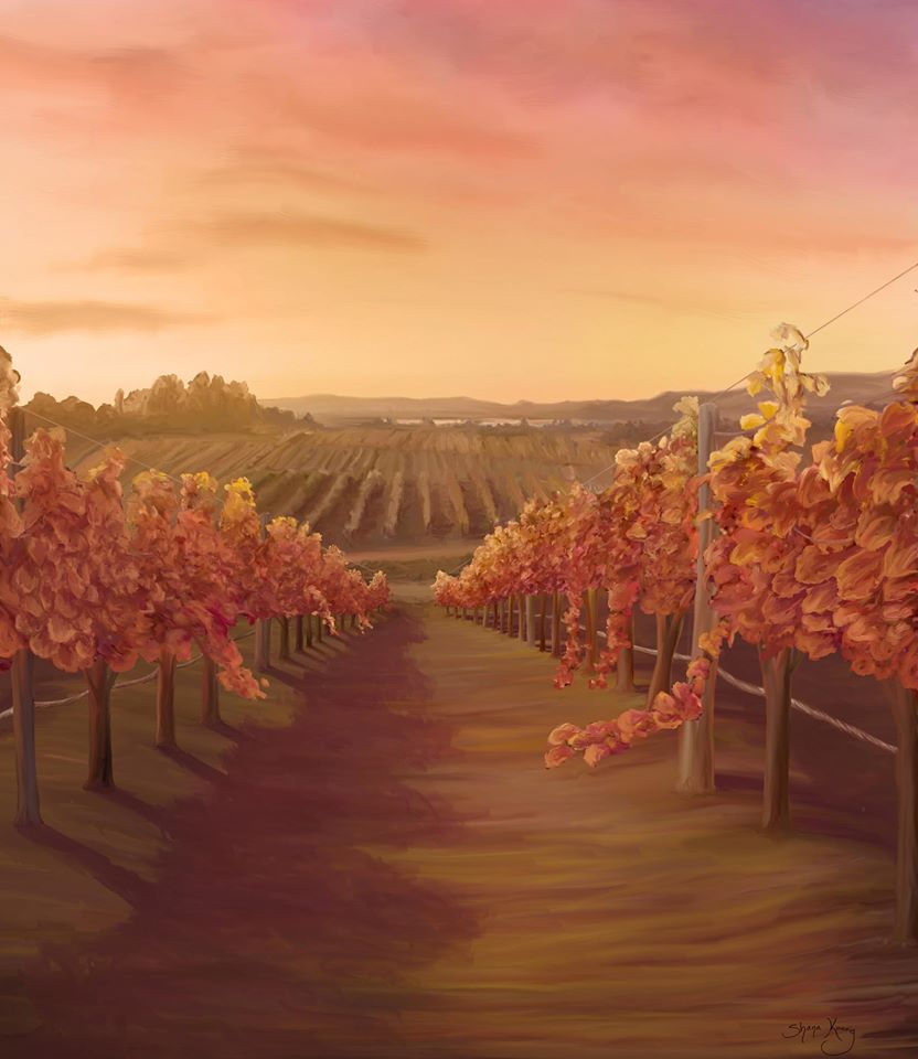 Napa Vineyard 01