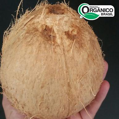 Coco Seco Orgânico - Unidade