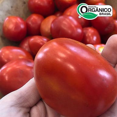 Tomate Salada Orgânico 500g - 600g