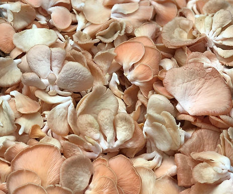 Cogumelo Shimeji Salmão Orgânico 200-250g