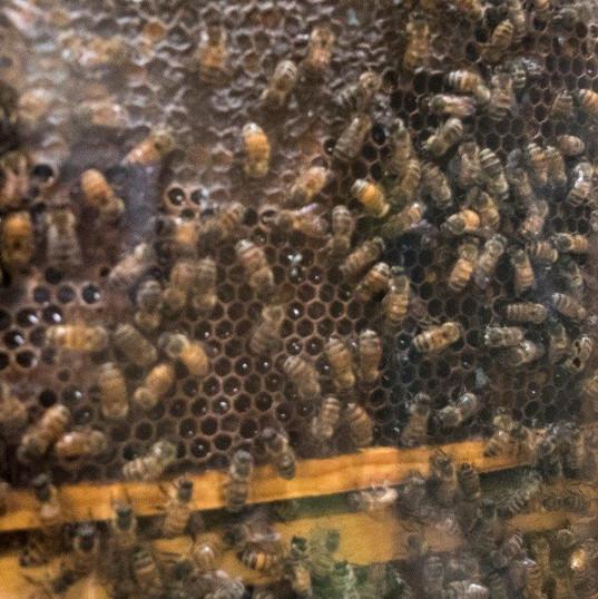 observation hive.jpg
