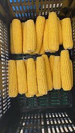 Yellow corn.jpeg