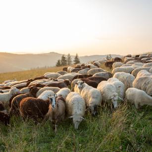 Shepherding Tomorrow's Leaders