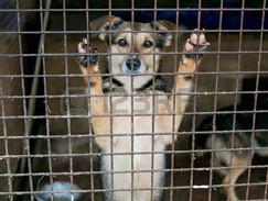 Dogs: Owned, Misunderstood, Abandoned