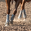 Thumbnail: Classic Equine Legacy2 Boots - Solids