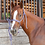 Thumbnail: Classic Equine Colored Mule Tape Halter with Lead