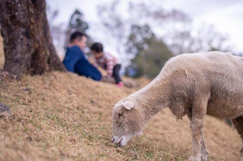 清境農場 2019-12-20-11-16-25-VA4_5033.JPG
