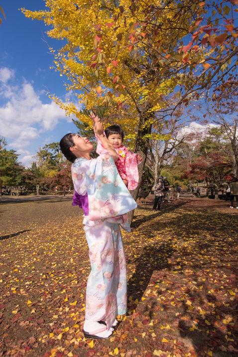 奈良公園楓葉銀杏秋季 2018-11-20-12-16-13-DSC_1846.