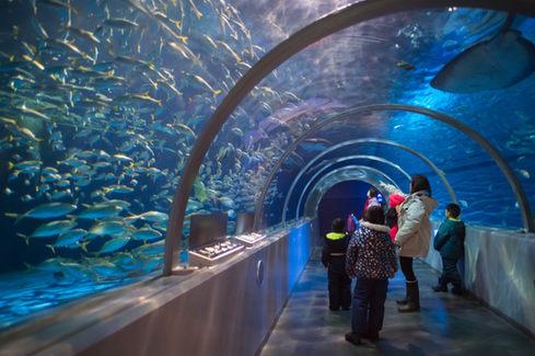 登別尼克斯海洋公園 北海道 2019-01-23-11-06-21-VA4_66
