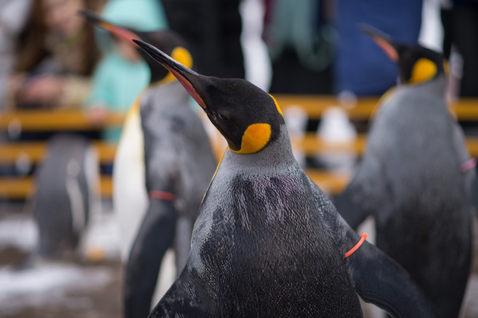 登別尼克斯海洋公園 北海道 2019-01-23-10-11-21-VA4_64
