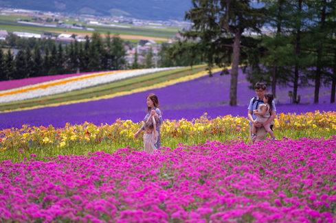 北海道富田農場 2019-07-18-09-52-34-VA4_0495.JPG