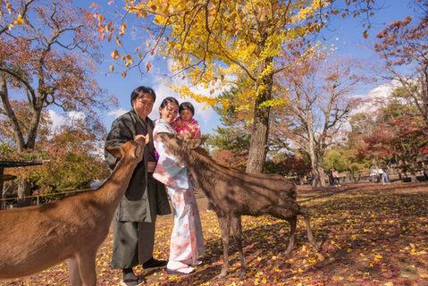奈良公園楓葉銀杏秋季 2018-11-20-12-17-04-DSC_1853.