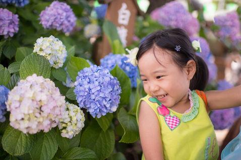 東京紫陽花季 繡球花 2018-06-13-13-30-53-VA4_5411.