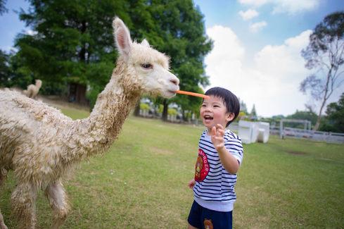 富田花海農場 動物落羽松 2017-07-24-11-26-05-DSC_682